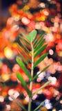 Suddig bakgrund som göras med julgranen och den gröna växten Arkivfoton