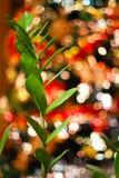 Suddig bakgrund som göras med julgranen och den gröna växten Royaltyfri Foto