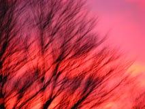 Suddig bakgrundstextur, vinterträd mot färgrik solnedgång Royaltyfria Foton