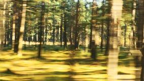 Suddig biltur i solig höstskogväg arkivfilmer