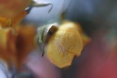 Suddig blom- abstrakt bakgrund Fotografering för Bildbyråer