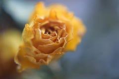 Suddig blom- abstrakt bakgrund Arkivfoton