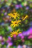 Suddig blom- bakgrund, gula vildblommor, bokeh royaltyfri bild