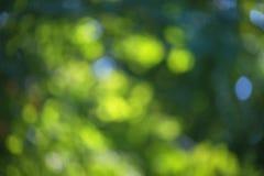 Suddig bokeheffekt på en bakgrund av gröna trädsidor royaltyfri fotografi