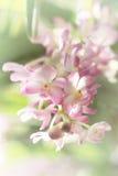Suddig dröm- bild av för Ascocentrum för pastellfärgade rosa färger blomman orkidé, den tonade och mjuka fokusen för sötsak arkivbild