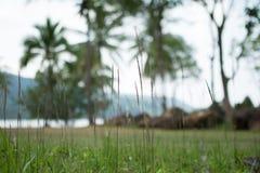 Suddig grässlätt och kokospalm Royaltyfri Bild