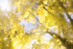 Suddig höstbakgrund Arkivfoton