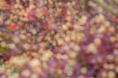 Suddig röd och vit blomma Royaltyfri Foto