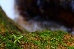 Suddig rinnande vattenbakgrund arkivfoton