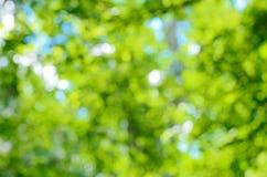 Suddig skogbakgrund Royaltyfri Fotografi