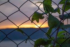 Suddig solnedgång bak ett cyklonstaket royaltyfri foto