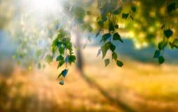 Suddig sommarsol Fotografering för Bildbyråer