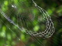 Suddig Spiderweb bakgrund med daggsmå droppar Royaltyfria Foton