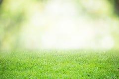 Suddig stil för abstrakt begrepp för natur för bakgrundsbokehgräsplan Royaltyfri Fotografi