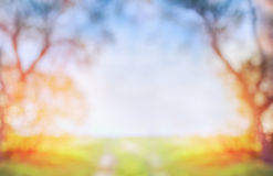 Suddig vår- eller höstnaturbakgrund med det gröna soliga fältet och träd på blå himmel