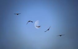 Suddiga abstrakta fåglar på blå himmel gillar symbol av frihet Royaltyfri Bild