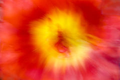 Suddiga blommor som naturlig bakgrund royaltyfria bilder