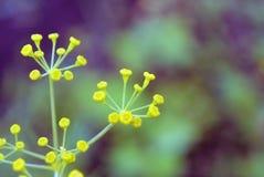 Suddiga gräsplansidor på mjuk bakgrund Unfocused abstrakt naturbakgrund Arkivfoton