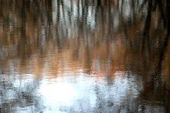 Suddiga trädreflexioner i vatten arkivbilder