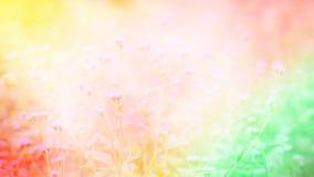 Suddighet av gräsblomman med mjuk färgrik vårbakgrund Royaltyfria Foton