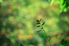 Suddighet av gräsplansidamodellen för begrepp av sommar eller vårsäsongen bakgrundsbokehtextur Arkivbild
