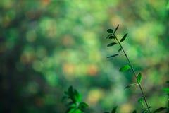 Suddighet av gräsplansidamodellen för begrepp av sommar eller vårsäsongen bakgrundsbokehtextur Royaltyfria Bilder
