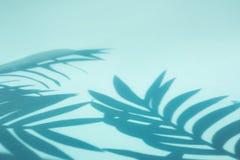 Suddighet av kokosnöten och palmbladet med skugga på färgrikt Bakgrund Semestra begrepp, tropiskt och sommar arkivbilder