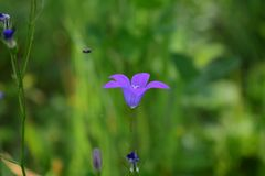 Suddighet färgar på våren blommor och trädgården fotografering för bildbyråer