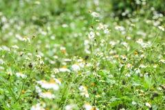 Suddighet för bakgrund för blomma för gräs för suddighet för gräsblommabakgrund Royaltyfria Foton