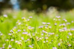 Suddighet för bakgrund för blomma för gräs för suddighet för gräsblommabakgrund Arkivbild