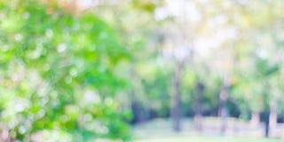 Suddighet parkerar med bokehljusbakgrund, naturen, trädgård, fjädrar Arkivbilder