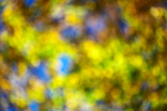 Suddigheta höstleaves Royaltyfri Foto