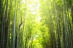suddighetsabstrakt begrepp av bambuskogen Arkivfoto