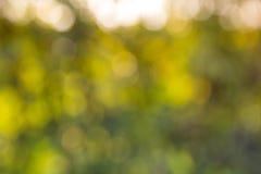 suddighetsbokeh i trädgård royaltyfri foto