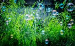 suddighetsbubbla Royaltyfria Foton