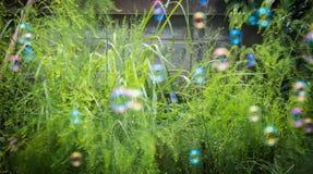 suddighetsbubbla Arkivbilder