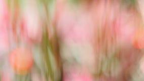 Suddighetsrosa färgblomma som en bakgrund Arkivfoto