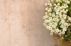 Suddigt bakgrundsgolv av den gröna växten bredvid stenlagd yttersida med vita blommor arkivfoto