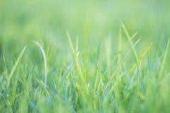 Suddigt gräs ut ur abstrakt begrepp b för fält för grönt gräs för fokus tropiskt Arkivbilder
