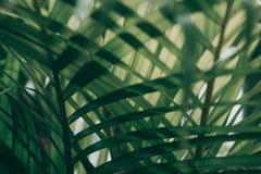 Suddigt tropiskt grönt blad utanför fönstret royaltyfri bild