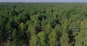 Sudore illegale della foresta, affogante, danno all'ambiente, rottura ambientale video d archivio