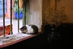 Sueño al mediodía Fotografía de archivo