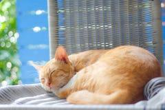 Sueño anaranjado del gato Fotografía de archivo