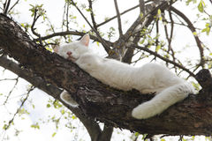 Sueño blanco del gato en el árbol Imagen de archivo