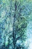 Sueño con árboles Imagen de archivo