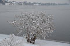 Sueño de enero: Columbia helado, Richland, WA Fotografía de archivo