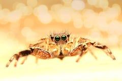 Sueño de la araña fotos de archivo libres de regalías