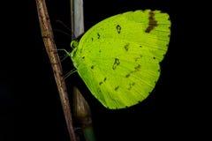 Sueño de la mariposa en la noche imágenes de archivo libres de regalías