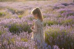 Sueño de la niña hermosa con el ramo de lavanda entre prado floreciente Imagen de archivo