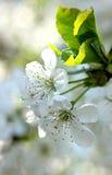 Sueño de la primavera Imágenes de archivo libres de regalías